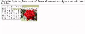 flores3 (1)